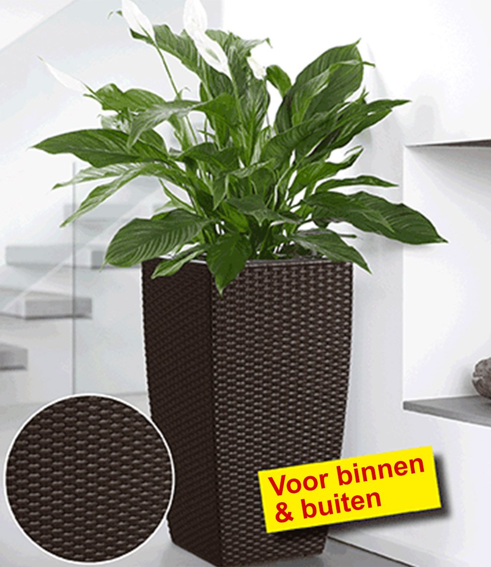 emsa casa mesh bloemenzuil 57 cm ho bloempotten bij baldur nederland. Black Bedroom Furniture Sets. Home Design Ideas