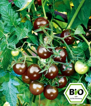 BIO Tomaat 'Black Cherry'