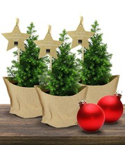 Mini Kerstboom set van 3