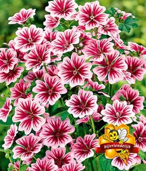 Witte Vaste Planten.Winterharde Vaste Planten A Z Nu Online Kopen Bij Baldur Nederland