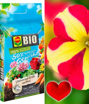 Petunia 'Amore® Queen of Hearts' & COMPO® & COMPO® bio potgrond 50 procent minder gewicht