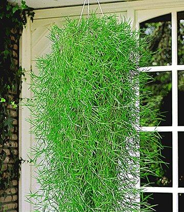 hangende bamboe 39 green twist 39 bamboe bij baldur nederland. Black Bedroom Furniture Sets. Home Design Ideas