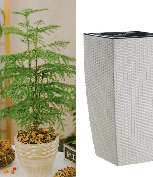 zimmertanne emsa casa mesh s ule groene planten bij. Black Bedroom Furniture Sets. Home Design Ideas