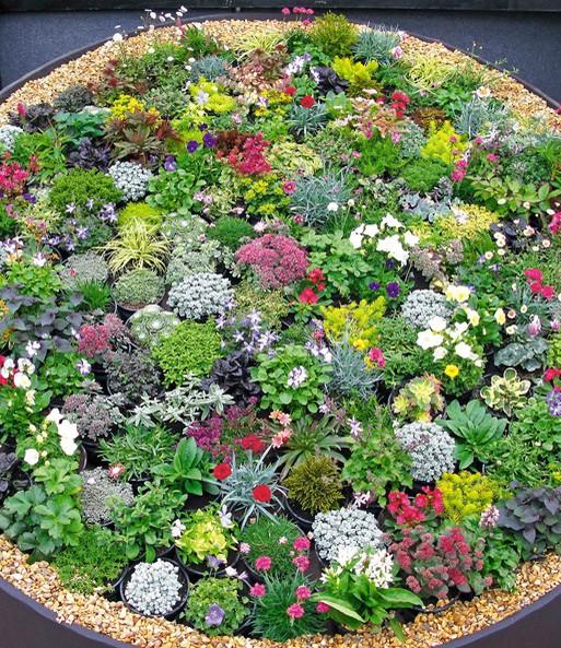 Steingarten stauden mix steingartenstauden bei baldur garten for Gartengestaltung ohne pflanzen
