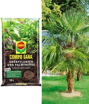 COMPO® SANA® palmpotgrond & Washington palm