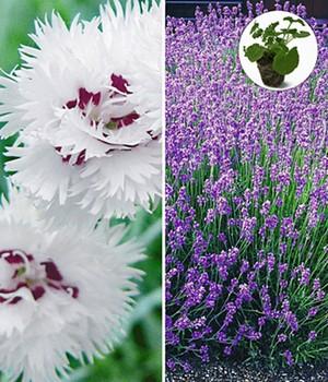 perkplanten nu online kopen bij baldur nederland. Black Bedroom Furniture Sets. Home Design Ideas