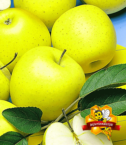 Zuilappel 'Golden Delicious'