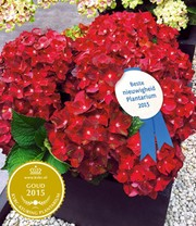 Tuinhortensia 'Ruby Tuesday'