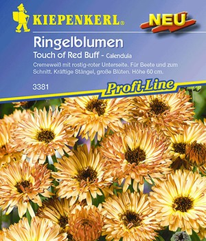 Goudsbloemen 'Touch of Red Buff'