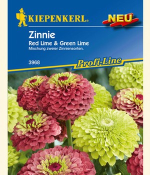 Zinnia 'Red Lime & Green Lime'