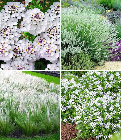 Witte Vaste Planten.Winterharde Vaste Planten Elegant In Het Wit