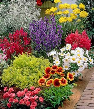 Baldur vaste planten