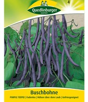 Sperzieboon 'Purple TEEPEE' blauw