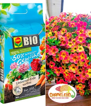 Calibrachoa 'Atomic Orange' & COMPO® bio potgrond 50 procent minder gewicht