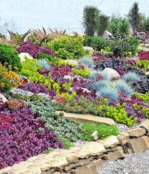 Vaste planten collectie 'Rock Garden'