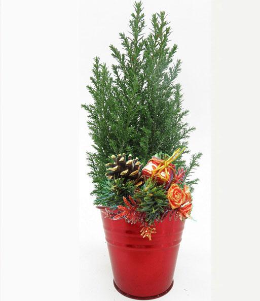 mini weihnachtsbaum im zink bertopf baldur garten. Black Bedroom Furniture Sets. Home Design Ideas