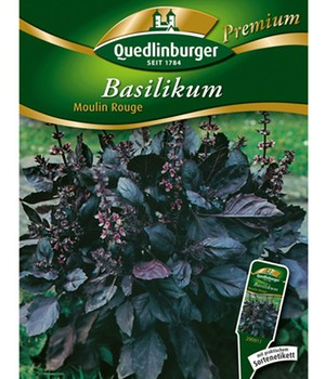 Basilicum 'Moulin Rouge'