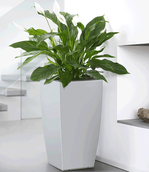 emsa casa brilliant bloemenzuil 57 bloempotten bij baldur nederland. Black Bedroom Furniture Sets. Home Design Ideas