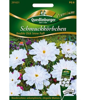 Cosmea 'Double Click Snow Puff'