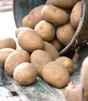 potatopot 1a qualit t baldur garten. Black Bedroom Furniture Sets. Home Design Ideas