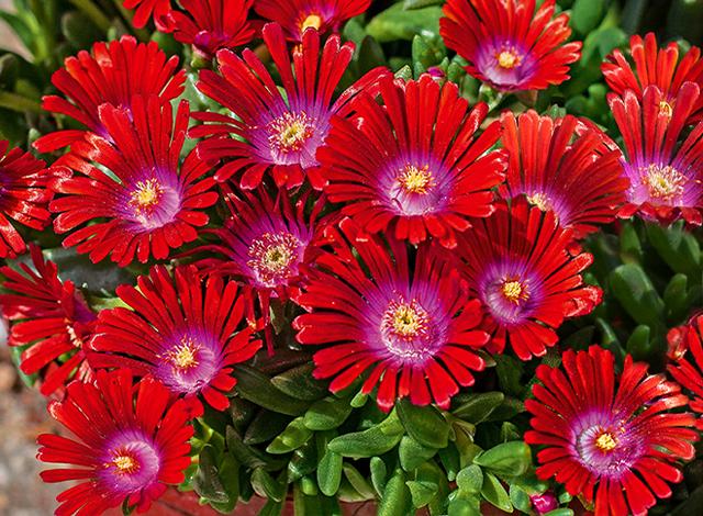 Baldur Nederland Postorderbedrijf Voor Planten Tuinartikelen